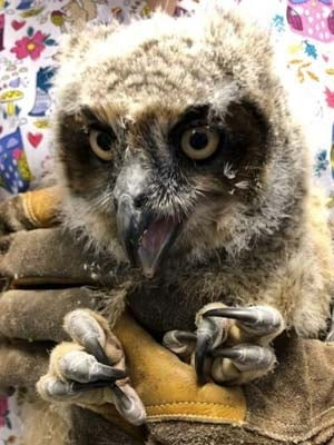Photo courtesy of the Wildlife Center of Virginia