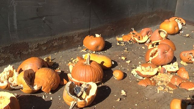 Great Pumpkin Smash at McIntire Recycling Center