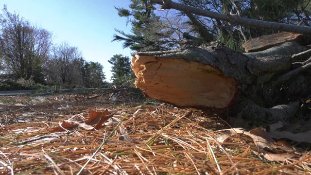 Waynesboro is still dealing with debris left behind by a winter storm.