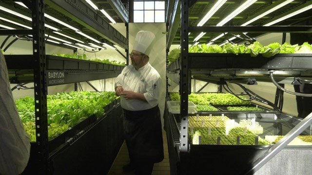 Boar's Head unveiled its new hydroponic farm on Tuesday morning.