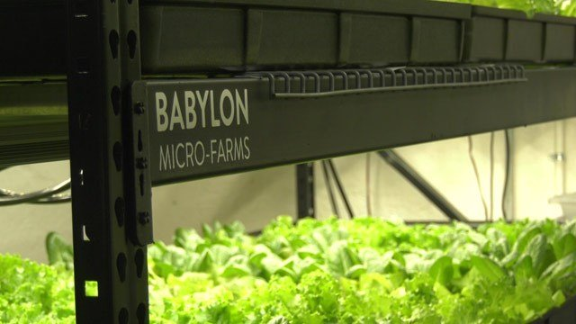 The system was installed by local startup Babylon Micro-Farms, which also has a system at Three Notch'd Brewery.