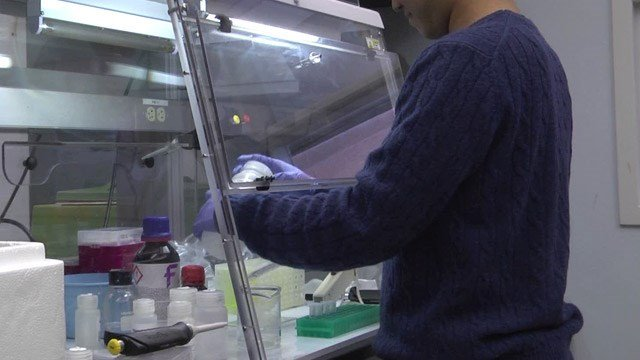Lab work being done at the University of Virginia School of Medicine (FILE IMAGE)