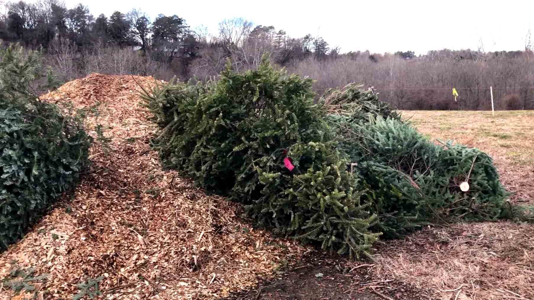 Trees given to the Albemarle County Recycling Program.