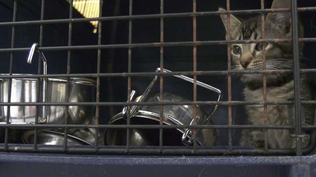CASPCA Takes in Over 70 Cats from Florida Shelter, Looks to Public for Help