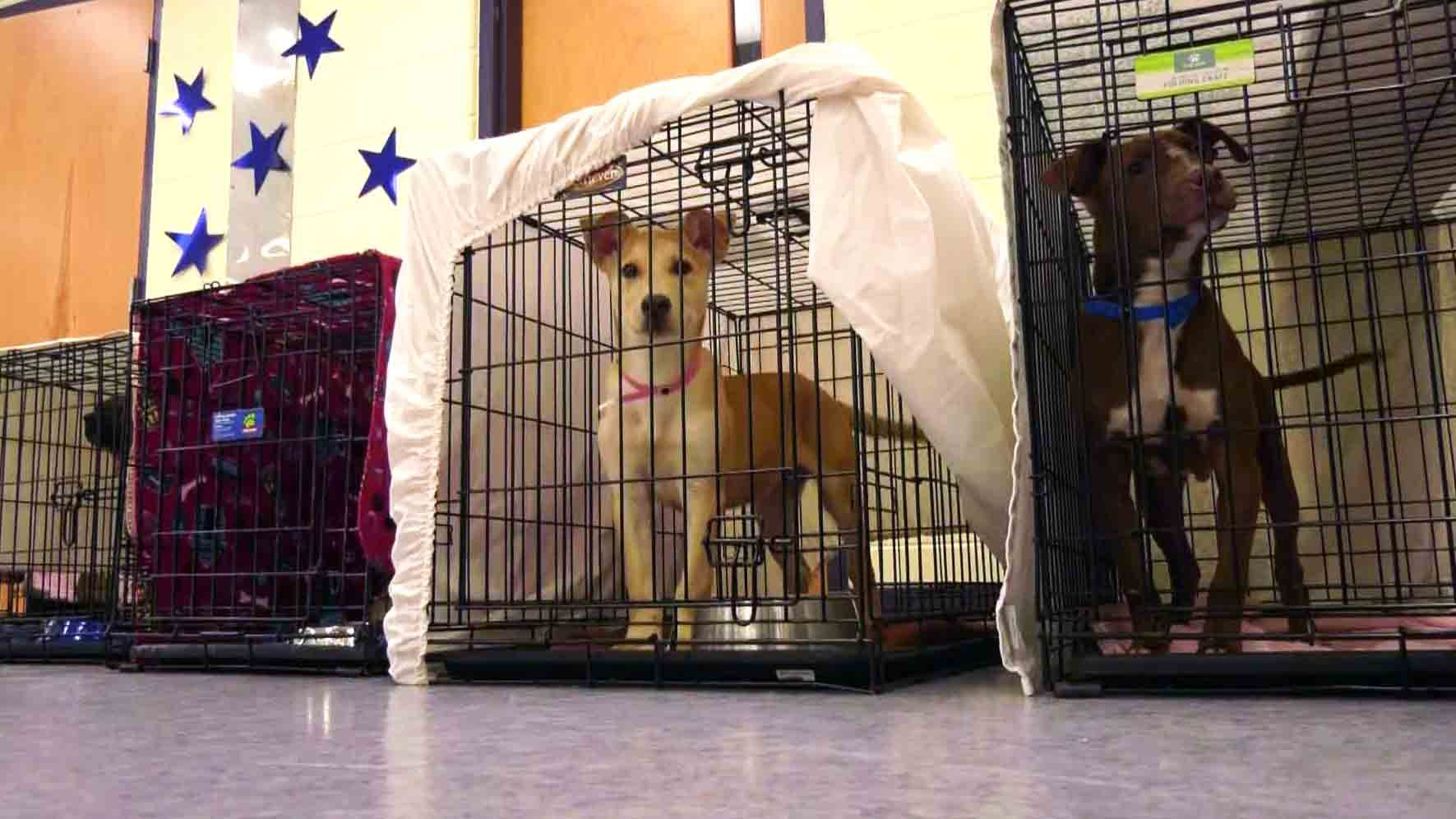 Dozens of Shelter Dogs Arrive in Central Virginia Following Severe Weather in Oklahoma