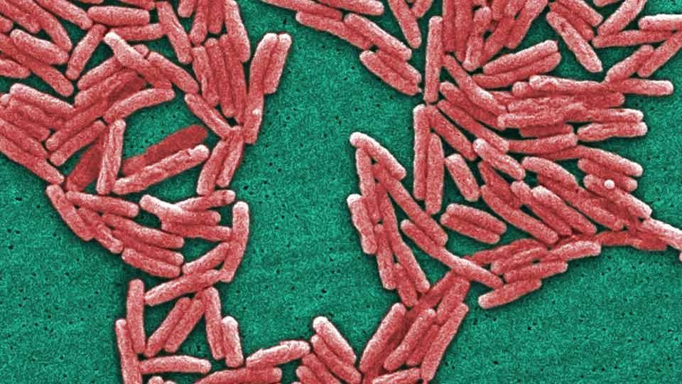 Virginia Health Officials Find 7 Sites with Legionella Germs