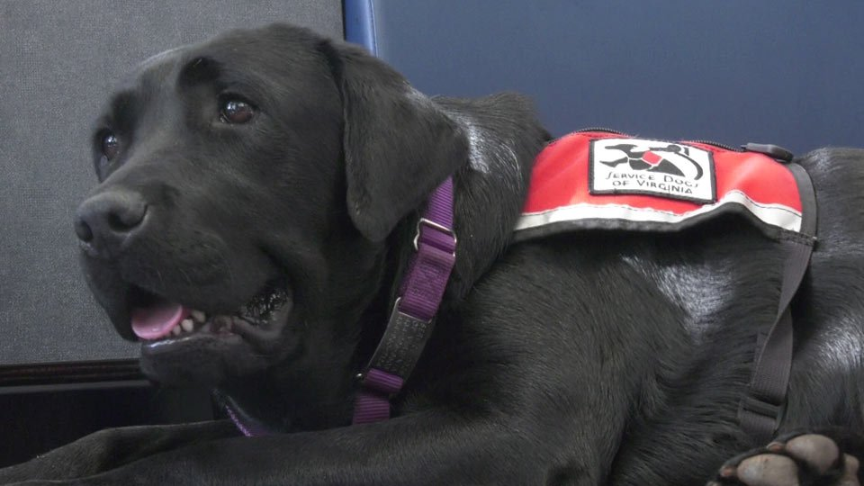 Brown Collision Center Donates $40K to Service Dogs of Virginia