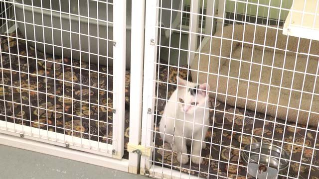 Further Renovations Have the Fluvanna SPCA Seeking Foster