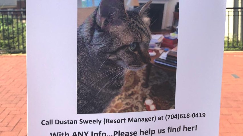 Missing Cat from Pet Paradise Fire Found Safe, Returned to